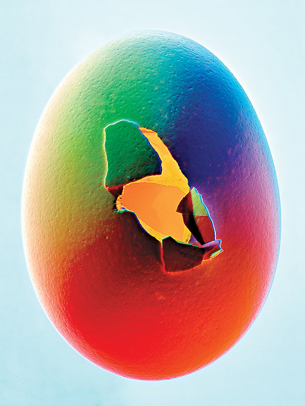 bobby doherty photography food egg